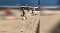 Pies harcował z uroczymi trojaczkami