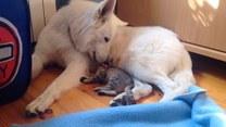 Pies i kot zostali nierozłącznymi przyjaciółmi
