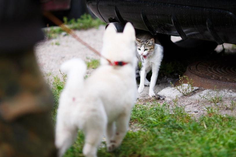 Pies i kot /©123RF/PICSEL