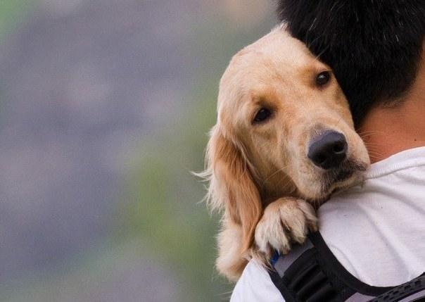 Pies jako terapeuta /© Photogenica
