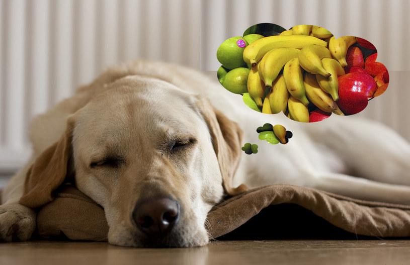 pies jedzenie /© Photogenica
