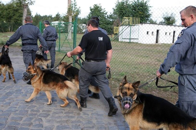Pies jest najbardziej skutecznym strażnikiem /Agata Pilarska-Jakubczak /East News