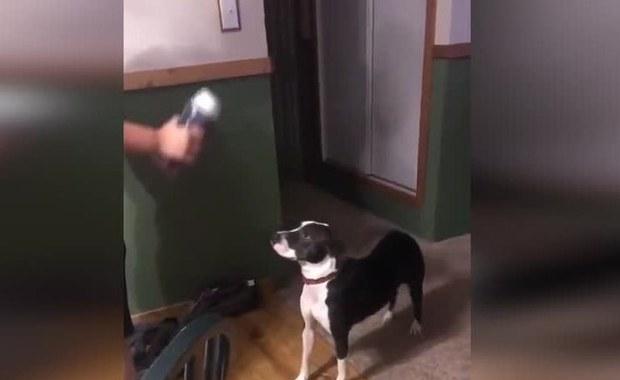 Pies, który nie cierpi zapachów. Zobacz, jak reaguje