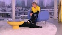 Pies, który pomaga dzieciom w rehabilitacji. Jaka jest jego rola?