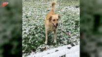 Pies łapie płatki śniegu. Jak zawodowiec!
