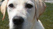 Pies mądrzejszy od człowieka?