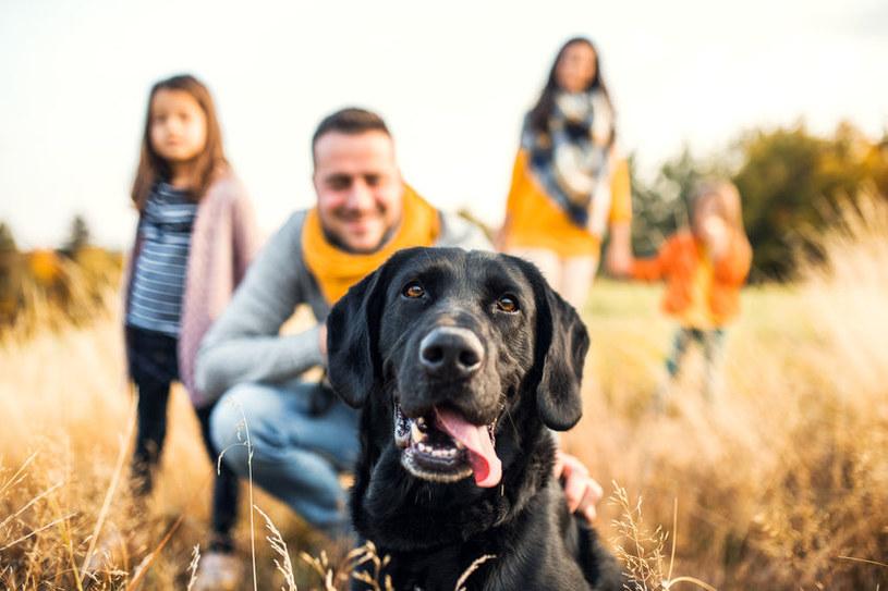 Pies może być apatyczny /©123RF/PICSEL