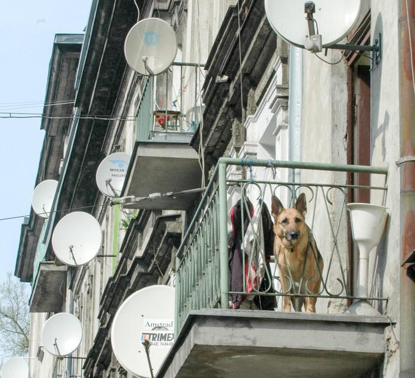 Pies na balkonie /Piotr Kamionka /Reporter