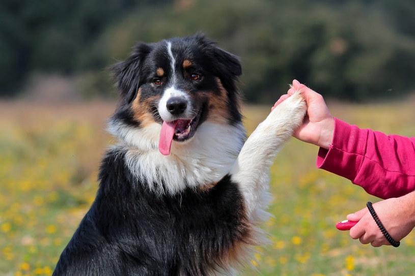 Pies najlepszym przyjacielem człowieka? /123RF/PICSEL