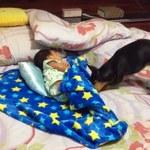 Pies opiekuje się śpiącym dzieckiem. Rozczulający widok! - WIDEO