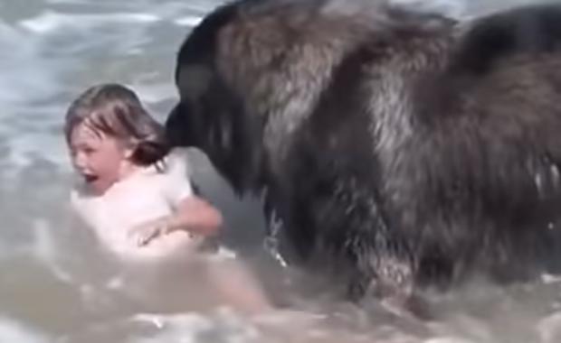Pies postanowił uratować małą dziewczynkę. To nagranie podbiło serca internautów!