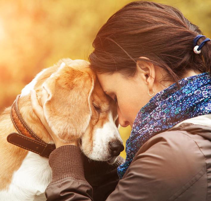 Pies remedium na stres /©123RF/PICSEL