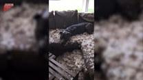 Pies rozrabiaka. Po powrocie kobieta nie poznała domu