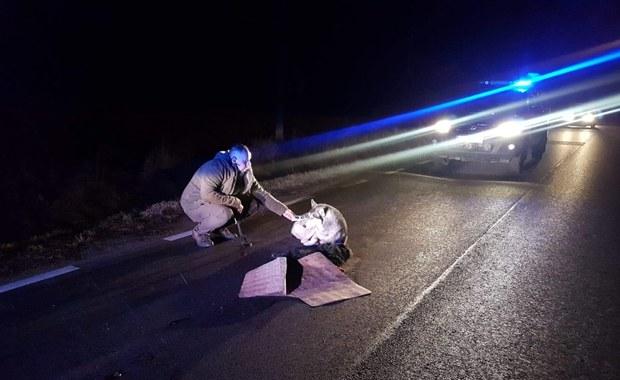"""Pies siedział na ulicy i pilnował swojego zabitego przyjaciela. """"Bezduszni urzędnicy nie pomogli"""""""