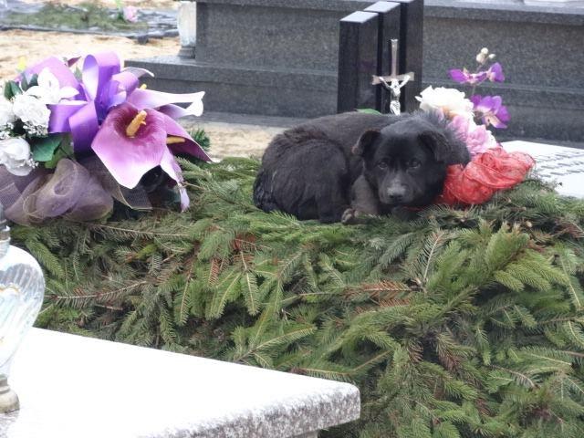 Pies spędził na cmentarzu kilka dni /Schronisko dla Zwierząt w Zawierciu /INTERIA.PL