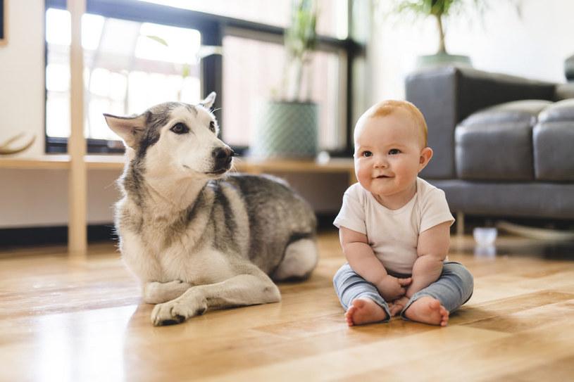 Pies to najlepszy przyjaciel dziecka /123RF/PICSEL