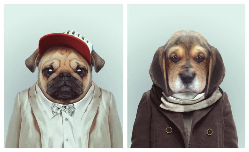 Pies to niekoniecznie najlepszy przyjaciel pracownika! /East News