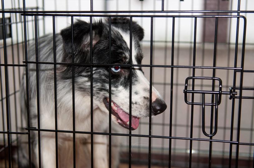 Pies w klatce; zdj. ilustracyjne /123RF/PICSEL