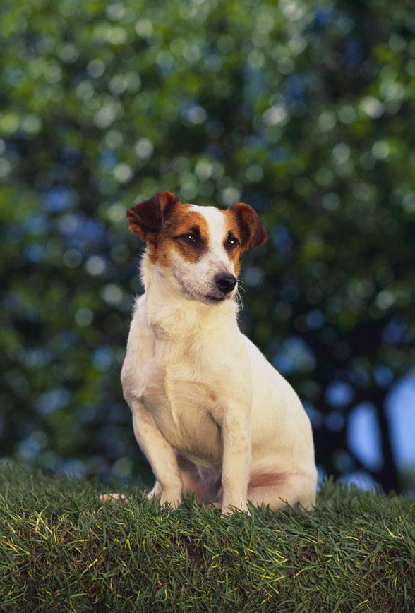 pies w ogrodzie /© Photogenica
