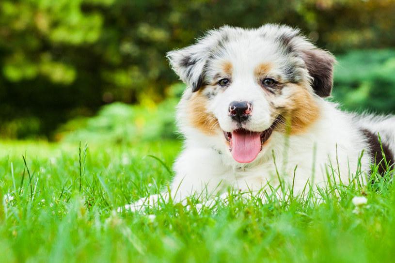 Pies w ogrodzie /123RF/PICSEL