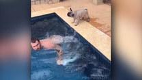 Pies wykorzystał swojego pana. Dosłownie