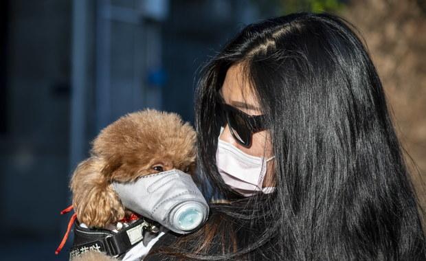 Pies zarażony koronawirusem Covid-19. Choruje też jego właściciel
