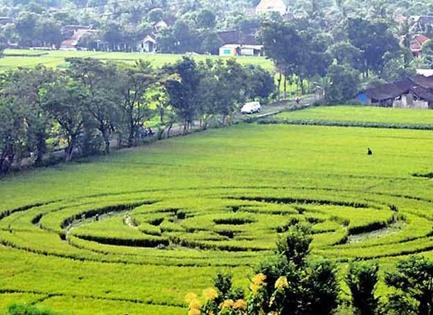 Piktogram na polu ryżowym w Krasakan pod Slemen w Indonezji /PAP