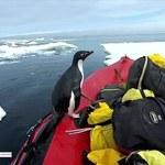 Pingwin wynurzył się z oceanu i wskoczył na łódkę. Niezwykłe nagranie