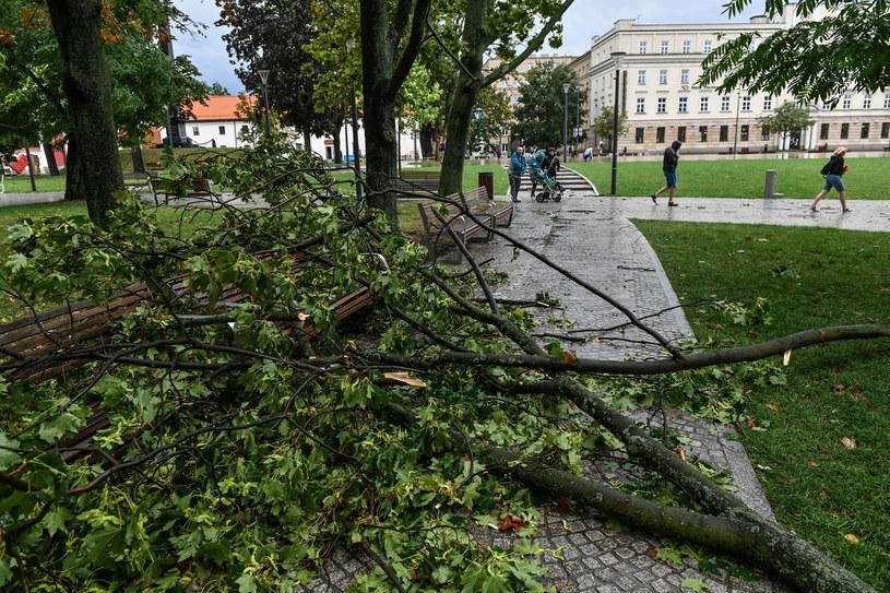 Plac Litewski w Lublinie po burzy /Wojtek Jargiło /PAP