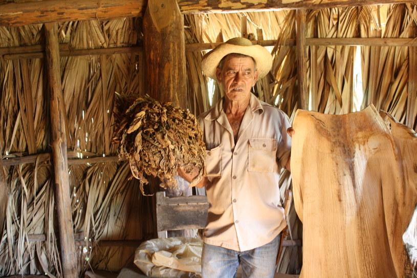 Plantator opowiada o uprawie tytoniu /Styl.pl
