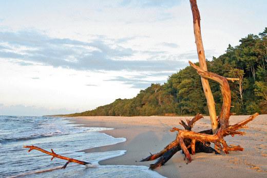 Plaża w Niechorzu /Damian Klamka /East News