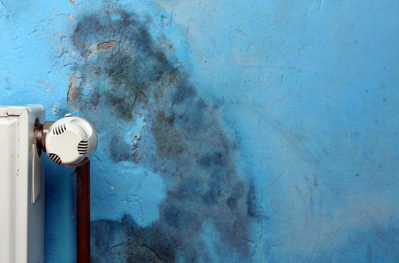 Pleśń często atakuje ściany /123RF/PICSEL