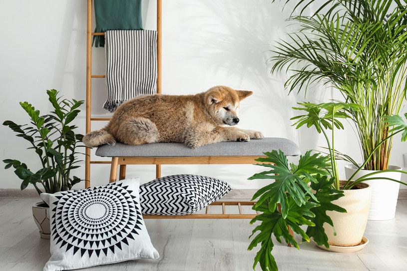 Pleśń rozwijająca się w roślinach może uczulać psa /123RF/PICSEL