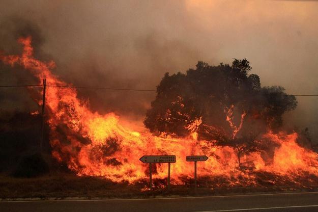 Płoną lasy /AFP
