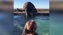 Pływała w basenie. Nagle pojawił się... słoń