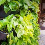 Pnące rośliny: Które wybrać do mieszkania? Jak je pielęgnować?