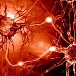Po co nam transport komórkowy? Nobel 2013 w medycynie niezasłużony?