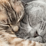 Po czym poznać, że kot ma pasożyty?