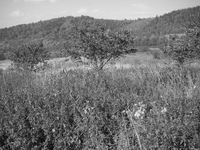 Po dawnych bieszczadzkich wsiach zostały nieliczne ślady – jak te jabłonki w Beniowej /Waldemar Bałda /INTERIA.PL