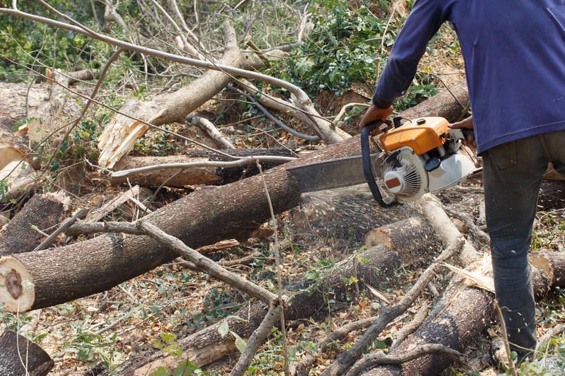 Po informacjach o masowej wycince drzew na prywatnych posesjach PiS zapowiedziało zmiany w ustawie /123RF/PICSEL