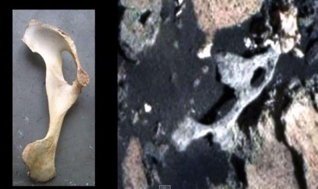 Po lewej kość, po prawej - rzekome odkrycie na Marsie /Innemedium.pl