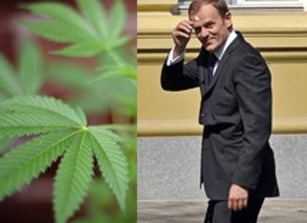 Po lewej: krzak marihuany, po prawej: uśmiechnięty premier Tusk ze stokrotką /AFP