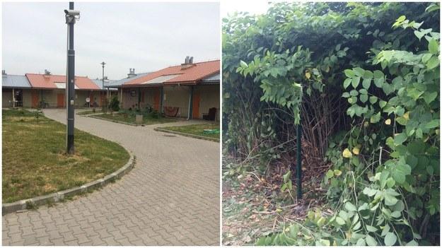 Po lewej: osiedle, na którym mieszkał 12-latek. Po prawej: zarośla, w których znaleziono ciało /Marcin Buczek /RMF FM