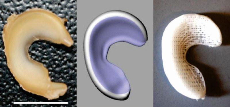 Po lewej: owcza łąkotka, w centrum: zeskanowany narząd, po prawej: wydrukowana łąkotka /materiały prasowe