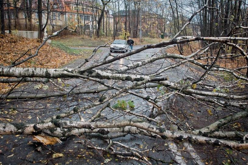 Po silnym wietrze kilka tysięcy osób pozostaje bez prądu /DARIUSZ GDESZ / GAZETA WROCLAWSKA / POLSKA PRESS /East News