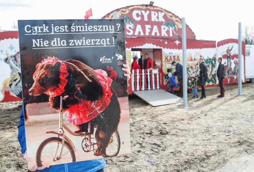 """Pod hasłem """"Cyrk jest śmieszny? Nie dla zwierząt!"""" zorganizowano pikietę przeciwko cyrkom i tresurze zwierząt w Rzeszowie /Krzysztof Kapica/Polska Press /East News/ Zeppelin"""
