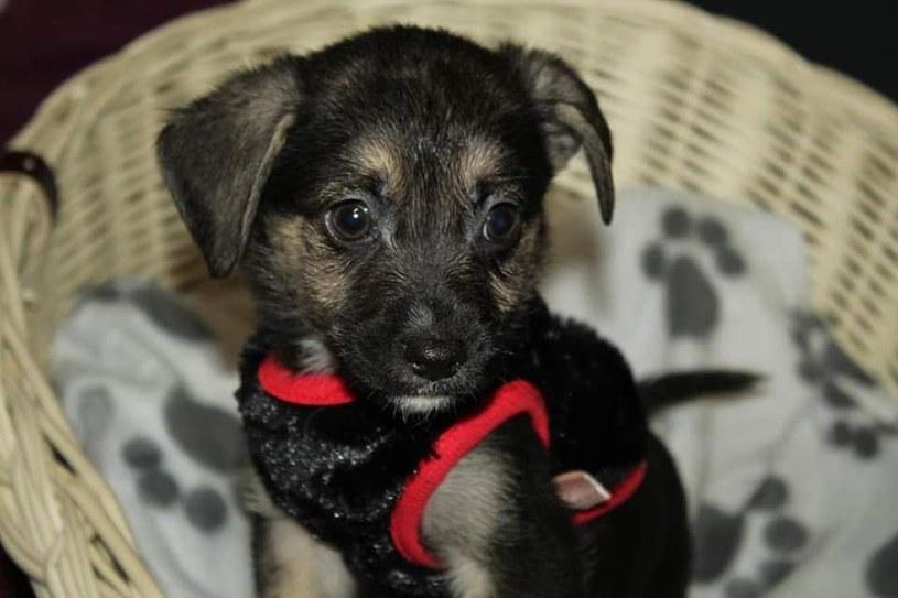 Pod opieką Fundacji Dla Kundelka znajduje się ponad 80 zwierzaków, najczęściej mocno skrzywdzonych przez los /facebook.com/domdlakundelka /materiały promocyjne