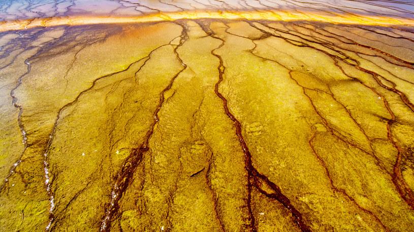 Pod powierzchnią Ziemi istnieją mikroby, które są potomkami starożytnych form życia /123RF/PICSEL