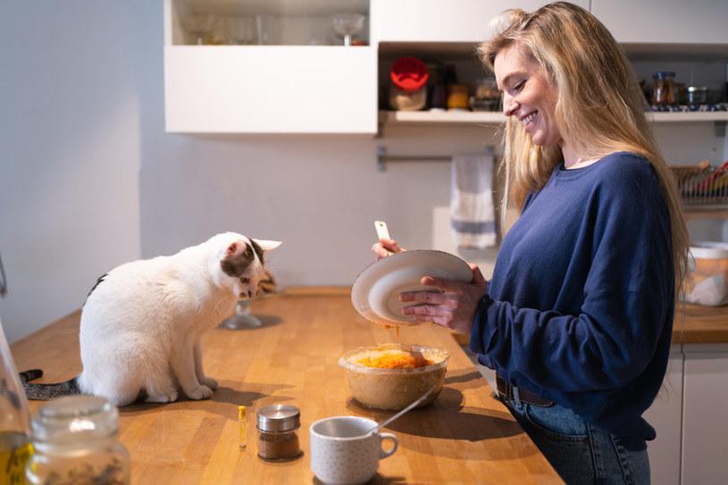 Pod żadnym pozorem nie podawaj kotu resztek ze stołu! /123RF/PICSEL