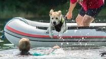 Podają łapę potrzebującym - psi bohaterowie na pomoc tonącym